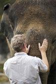 Sloní láska — Stock fotografie