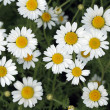 Flowers on the meadow — Stock Photo