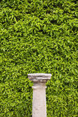 Column Pedestal and Living Wall — Stock Photo