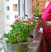 Seasonal flowering of balcony — Stock Photo