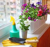 Seasonal flowering of balcony — Stock Photo