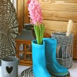 Постер, плакат: A pink hyacinth is in childs blue rubber knee boot Conception of vessenego season is in a garden Seasonal flowering of balcony