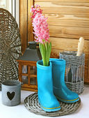 A pink hyacinth is in child's blue rubber knee-boot. Conception of vessenego season is in a garden. Seasonal flowering of balcony — Stock Photo