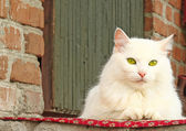 A beautiful white cat sitting on the porch — ストック写真