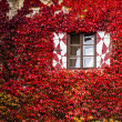 Windows of a house at autumn — Stock Photo #11763036