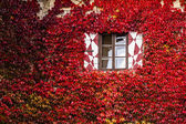Windows of a house at autumn — Stok fotoğraf