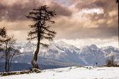 Single tree and Julian Alps — Stock Photo
