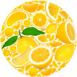 Lemon circle — Foto de Stock