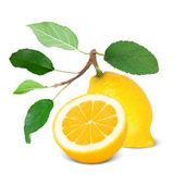 Fruit — Photo