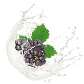 Owoce z splash — Zdjęcie stockowe