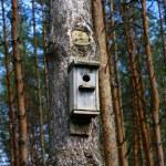 Birdhouse in a tree — Stock Photo