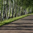 Pretty birch tree alley on a summer day — Stock Photo #11547792