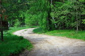 The road in the woods — Stock Photo
