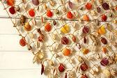 Souvenir - sea shells — Stock Photo