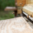 Bees are entering the beehive — Stock Photo