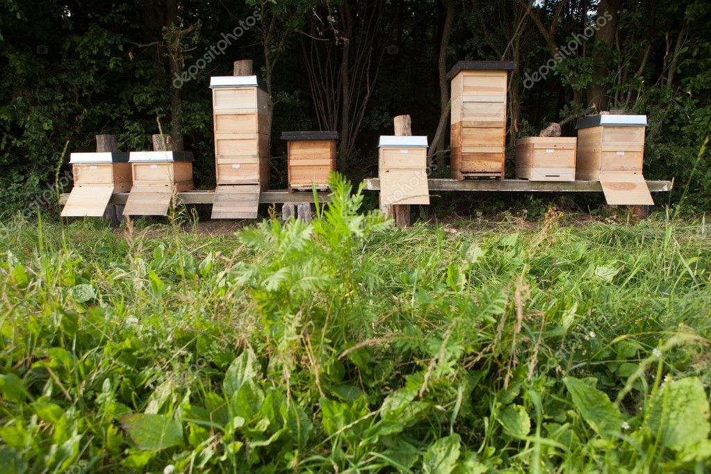 Beehives close to a forest — Stock Photo #12346615