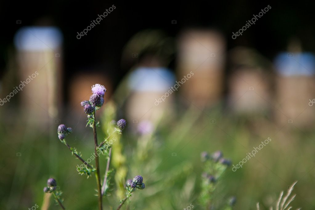 Flower in front of multiple beehives — Foto Stock #12346651