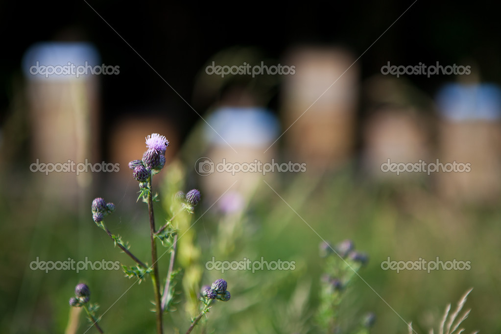 Flower in front of multiple beehives — Stok fotoğraf #12346651