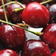 Cherries fruits — Stock Photo