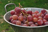 Grapes in a colander. — Stock Photo