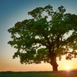 Colorful sunset with tree — Stockfoto