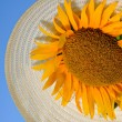 Beautiful sunflowers with blue sky and hat - Stok fotoraf