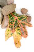 石头与颜色叶 — 图库照片