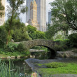Central Park — Stock Photo #11414574