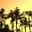Palm tree silhouette on paradise sunset on the beach — Stock Photo
