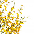 Yellow flowers — Stock Photo #11662135