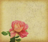 Roses design in grunge and retro style — Stock Photo