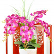 Beautiful pink orchid flower — Stock Photo