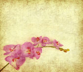 Card for invitation or congratulation with orchids — Stock Photo