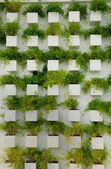 Wall grass Nursery — Stock Photo