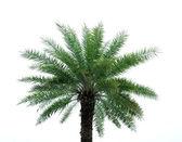 Palm tree — 图库照片