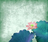 Water Lily on grunge textured background — Stock Photo