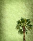 Palm with set of abstract painted background — Stockfoto