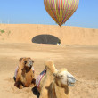 Balloon with camel in desert — Stock Photo