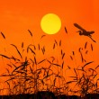 Stock Photo: Sunset with flighting bird