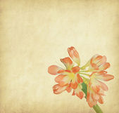 Chrysanthemum with set of abstract painted background — Stock Photo