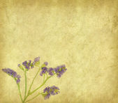 Lavender on paper background — Stockfoto