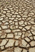 Land with dry cracked ground — Stock Photo