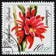 Stock Photo: Postage stamp GDR 1989 Adriana, Epiphyllum, Flowering Cacti