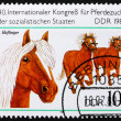 Postage stamp GDR 1989 Haflinger, Breed of Horse — Stock Photo