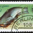 Postage stamp GDR 1987 Wels Catfish, Sheatfish, Silurus Glanis - Stock Photo