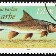 Postage stamp GDR 1987 Common Barbel, Barbus Barbus - Stock Photo