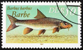 Postage stamp GDR 1987 Common Barbel, Barbus Barbus — Stock Photo