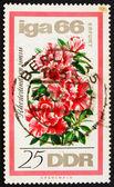 Francobollo gdr 1966 rododendro — Foto Stock