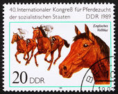 Postage stamp GDR 1989 English Thoroughbred, Breed of Horse — Stock Photo