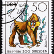 Postage stamp GDR 1986 Mandrill Monkey - Stock Photo